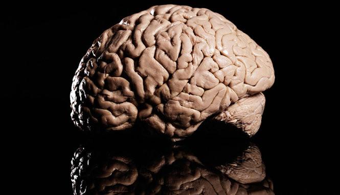 Công trình về cơ chế giải thưởng trong não đoạt giải 1 triệu Euro