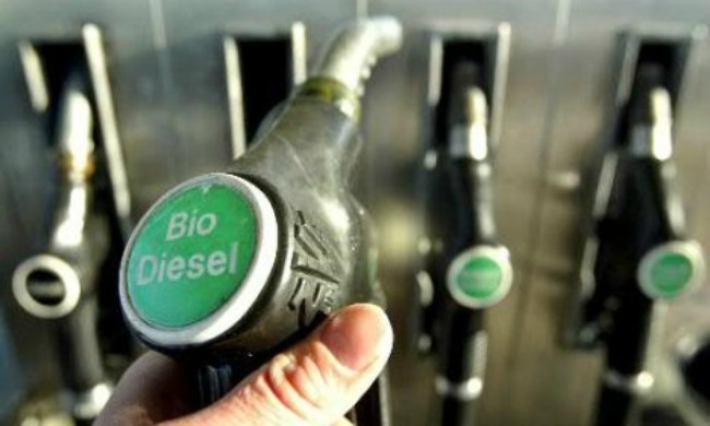Cuba bắt đầu thí điểm sản xuất diesel sinh học từ cây cọc rào