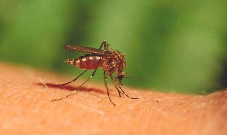 Cuộc yêu tử thần giúp con người thoát khỏi muỗi?