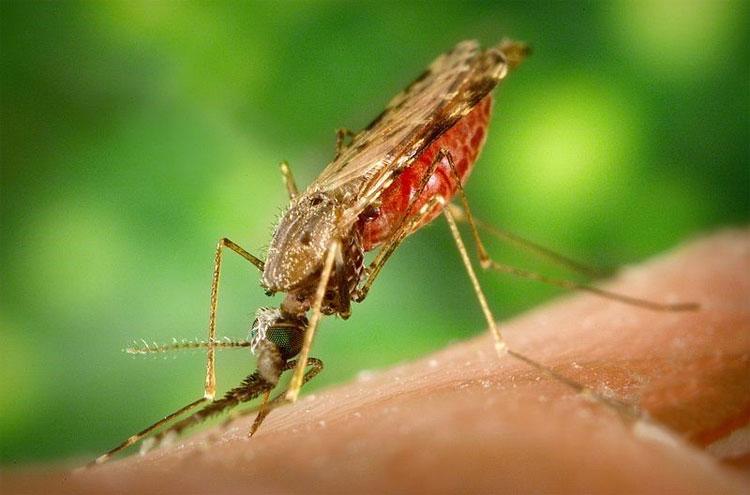 Đã bao giờ bạn tự hỏi: Ban ngày muỗi đi đâu chưa?