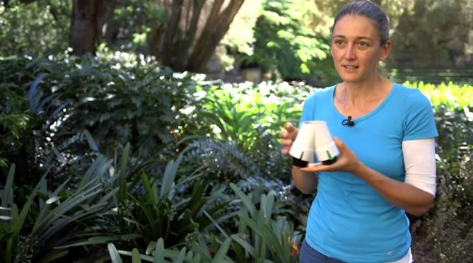 Đã tìm ra lý do làm thế nào cây cối có thể tìm ra nguồn nước