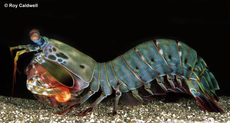 Dài 10cm và sống dưới đại dương, sinh vật này có thể thay đổi cả thế giới