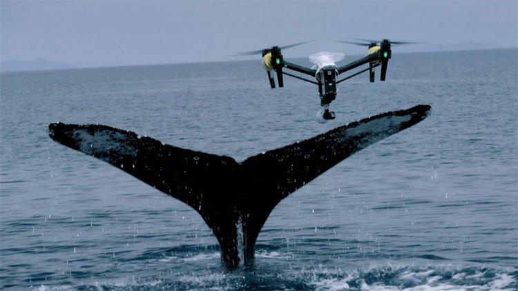 Dàn UAV chuyên săn tìm cá voi
