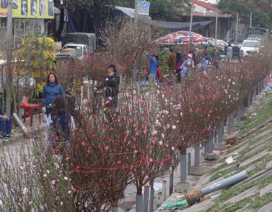 Đào khoe sắc ở chợ hoa Tết nổi tiếng nhất Hà Nội