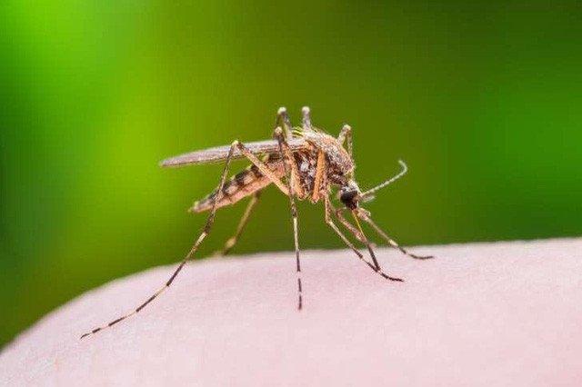 Đập muỗi, dù trúng hay không cũng có ích!