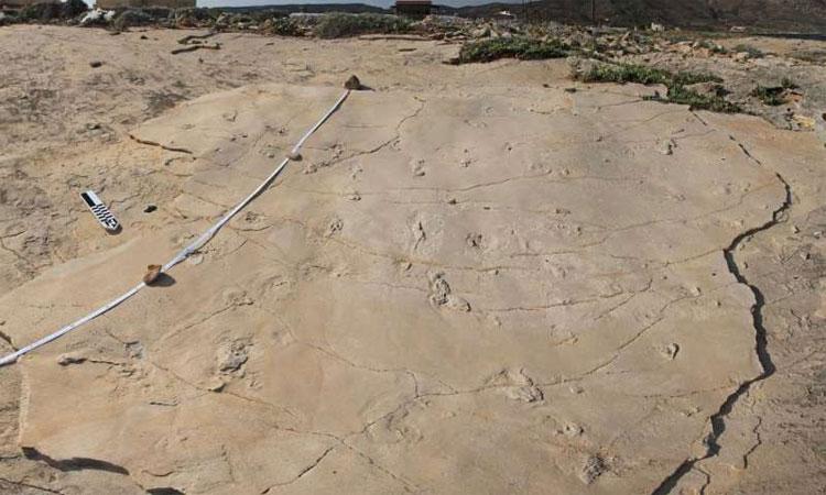 Dấu chân 5,7 triệu năm ở Hy Lạp thách thức thuyết tiến hóa