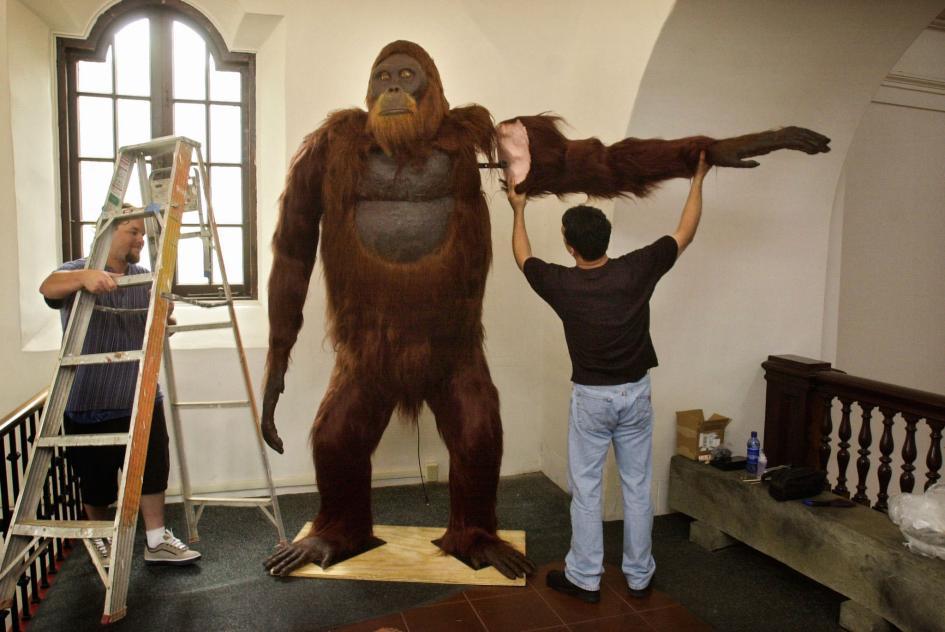 Đi tìm phiên bản đời thực của những loài động vật trong Cậu bé rừng xanh The Jungle Book
