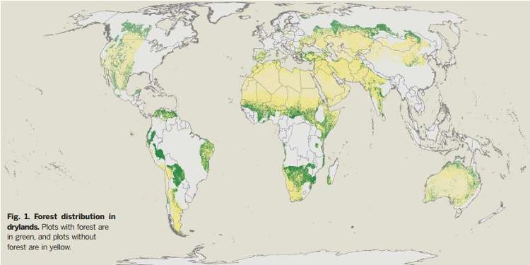 Diện tích rừng đang bao phủ hơn 9% Trái Đất, bạn có tin không?