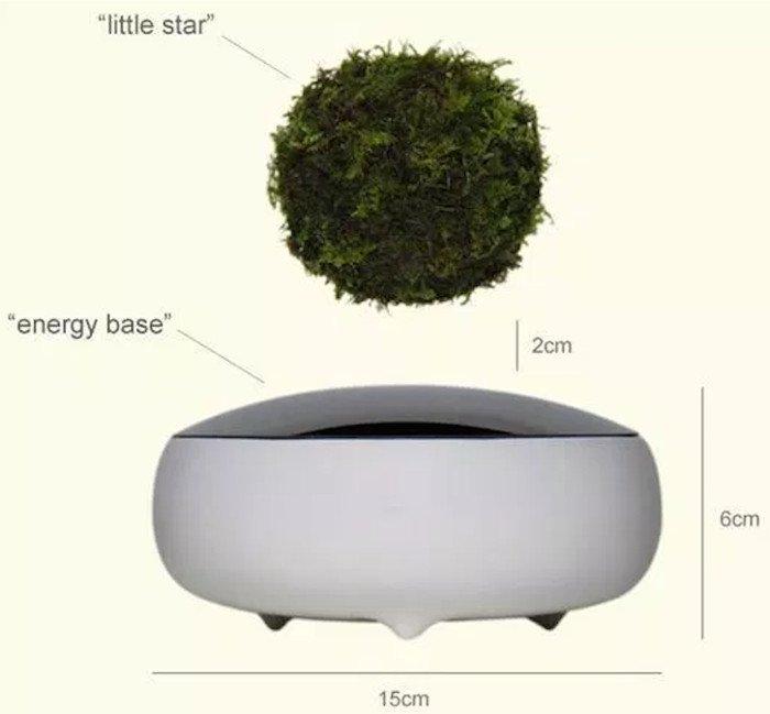 Độc đáo cây bonsai bay lơ lửng trên không