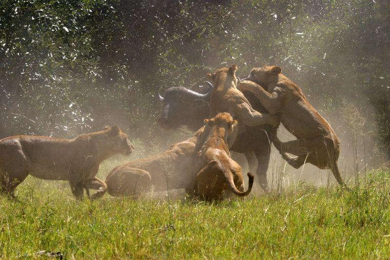 Đồng bằng Okavango - Di sản thiên nhiên thế giới tại Botswana