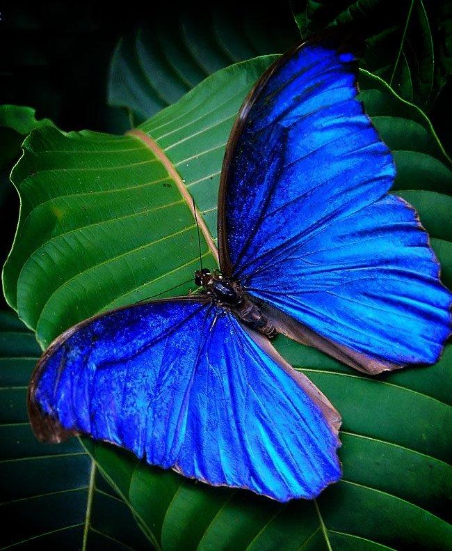 Đột phá công nghệ lọc ánh sáng lấy cảm hứng từ những cánh bướm