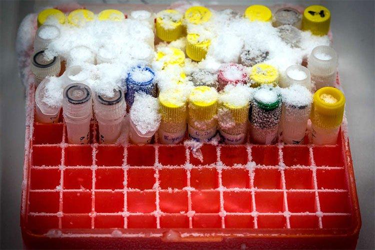 Đột phá khoa học này sẽ giúp 70.000 sản phụ không chết vì băng huyết