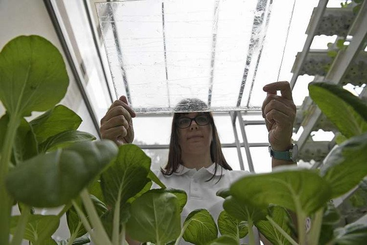 Dùng kính phủ nano kích thích tăng trưởng rau xanh