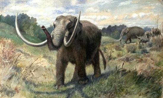 Giả thuyết mới về sự tuyệt chủng của voi răng mấu