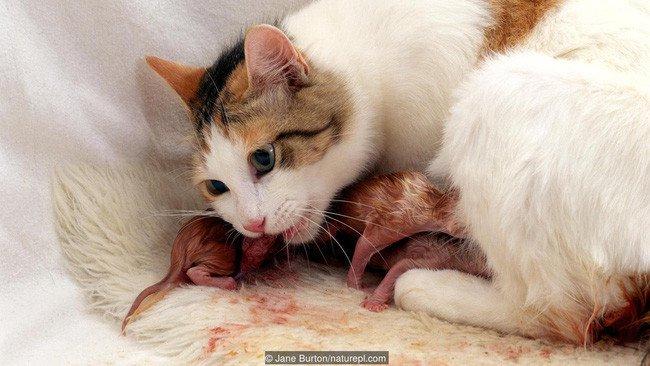 Giải mã hiện tượng kinh dị: Động vật tự ăn chính mình