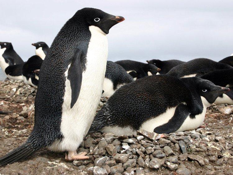 Góc khuất đen tối đã bị che giấu suốt trăm năm của loài vật dễ thương nhất hành tinh