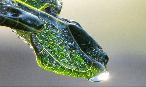 Hệ thống quang hợp nhân tạo biến nước thành hydro và oxy