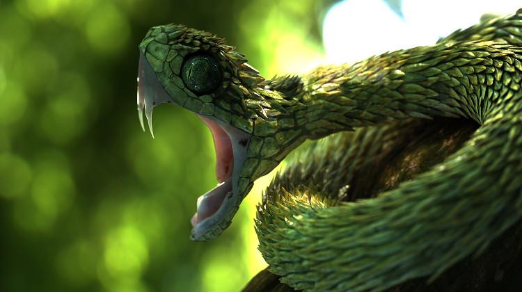 Hóa ra loài rắn trong bản hit của Taylor Swift không hề tầm thường chút nào
