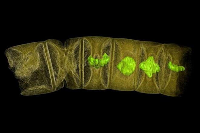 Hóa thạch 1,6 tỷ năm làm lung lay thuyết về sự sống trên Trái Đất