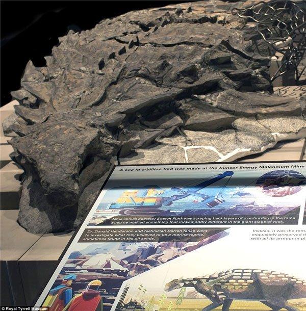 Hóa thạch khủng long 110 triệu năm thật đến kinh ngạc