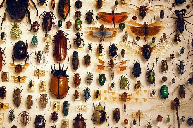 """Hơn 1 triệu loài côn trùng trên Trái đất nhưng đây là lý do mà chúng """"sợ"""" sống dưới biển"""
