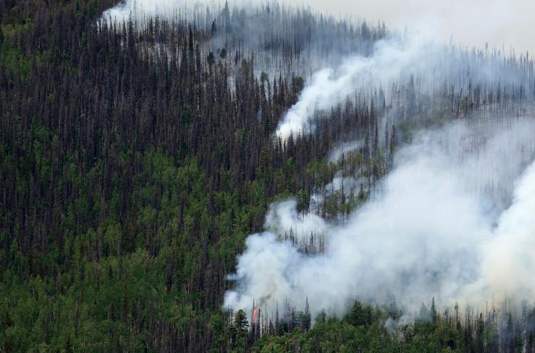 Hơn 800 triệu cây rừng ở Mỹ đột tử vì sát thủ hàng loạt nhỏ bé