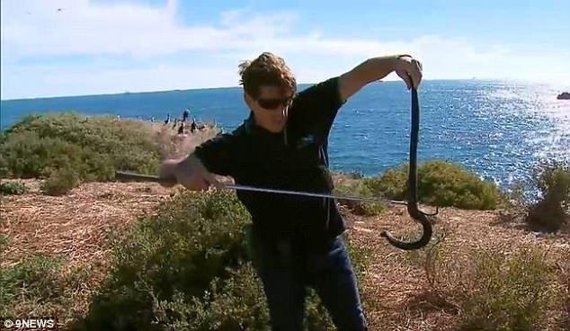 Hòn đảo vương quốc của rắn độc ở Australia