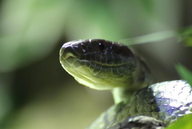 Ireland - Thiên đường dành cho những người sợ rắn