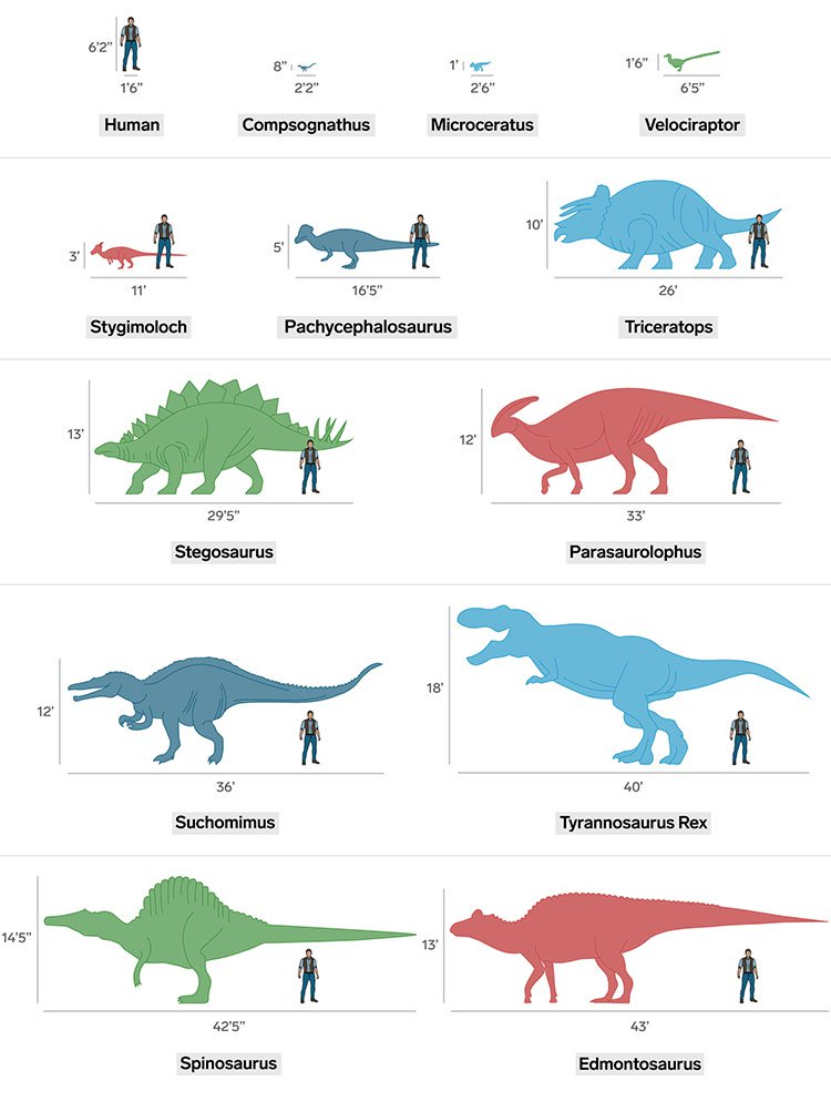 Jurassic World: Đây là kích cỡ thực của các loài khủng long nếu so với con người