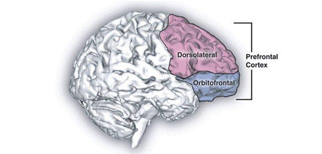 Khi bị thôi miên, não bộ của bạn xảy ra chuyện gì?