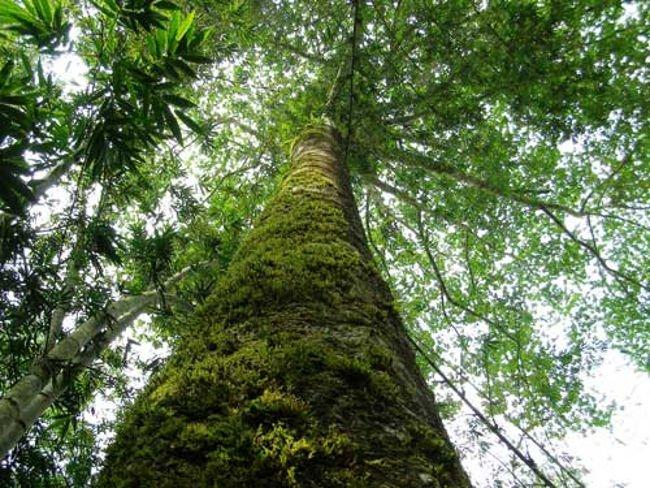 Khiếp sợ loài cây độc giết người trong 7 bước đi của Việt Nam