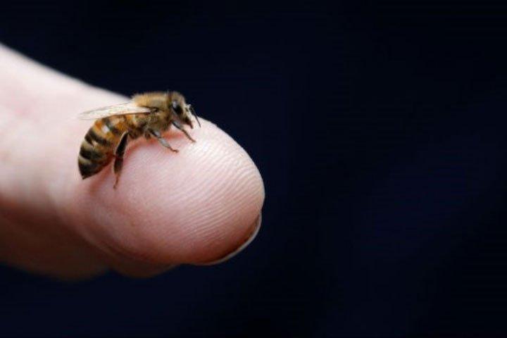 Không chỉ con người, loài ong cũng bị stress vì công việc