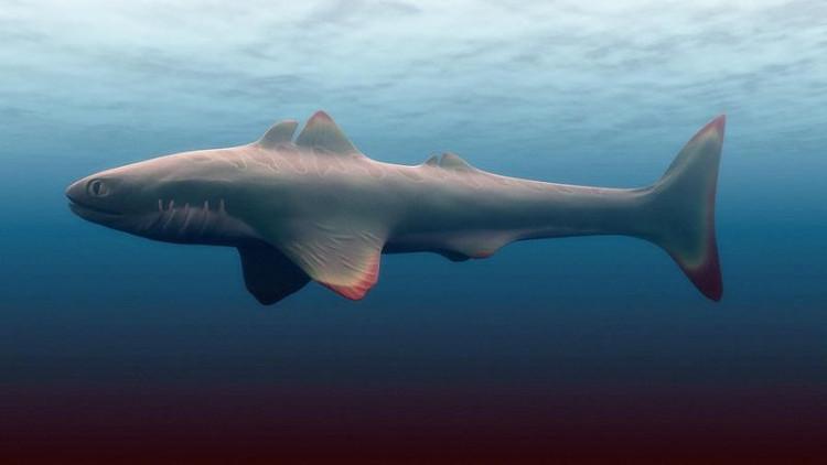 Không phải Megalodon, đây mới là kẻ đầu tiên thống trị đại dương