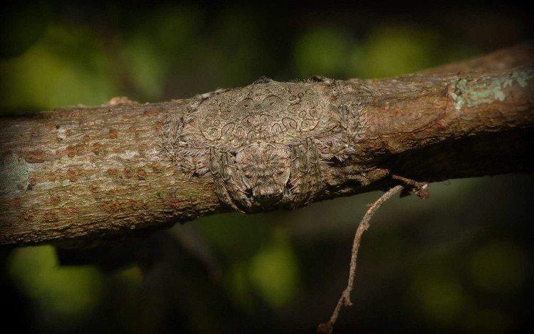 Kinh dị loài nhện có khả năng tàng hình siêu việt