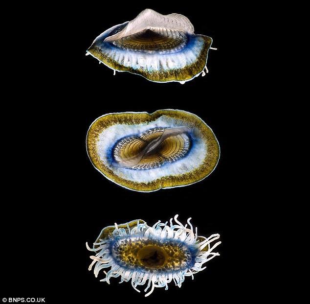 Kinh ngạc vẻ đẹp trong suốt của sinh vật biển sâu