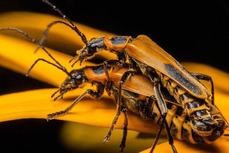 Kỳ lạ loài bọ Zombie có hành vi đồi bại trong tự nhiên