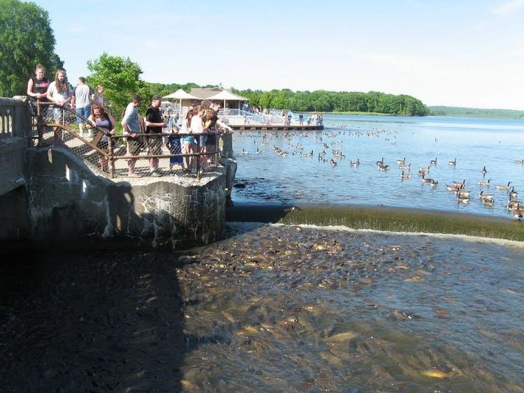 Kỳ lạ nơi vịt đi trên lưng hành nghìn con cá
