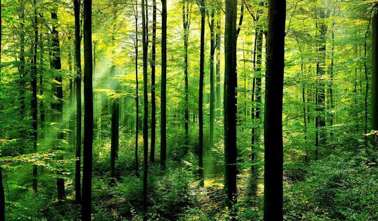 Kỷ lục thế giới: Trồng 66 triệu cái cây trong vòng 12 tiếng
