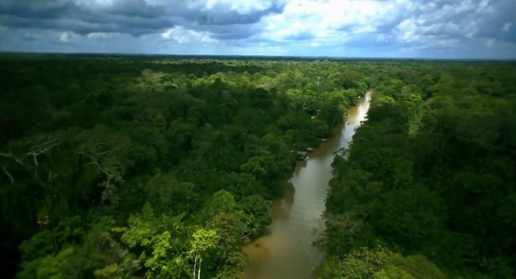 Lá cây rừng Amazon gọi mùa mưa đến sớm