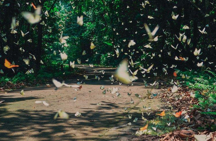 Lạc lối giữa rừng bướm ở vườn quốc gia Cúc Phương