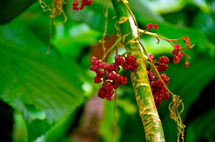 Loài cây đẹp nhưng cực độc - chạm nhẹ cũng khiến bạn sống-không-bằng-chết