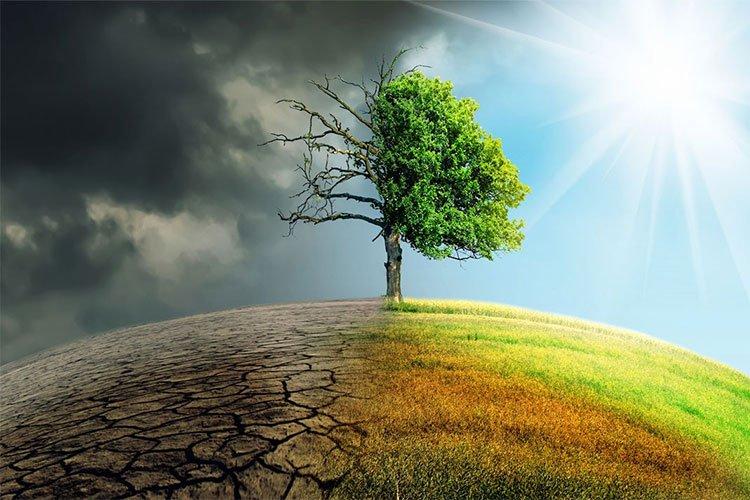 Loài tôm tí hon có thể giải cứu Trái đất trước quá trình biến đổi khí hậu