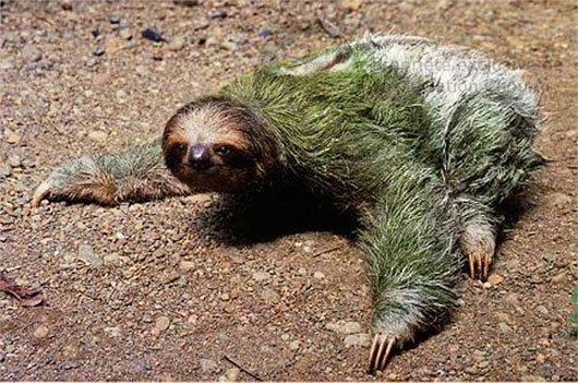 Loài vật lười biếng nhất thế giới