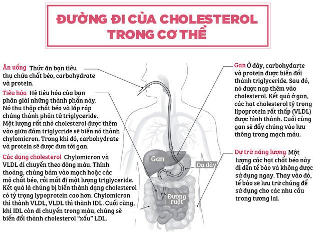 Mặt khác của cholesterol mà ít người biết tới
