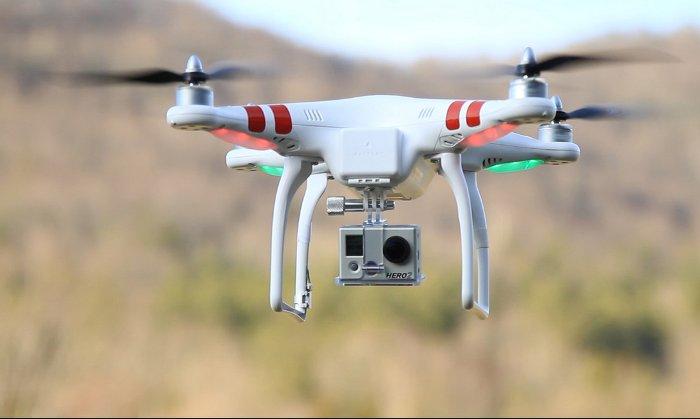 Máy bay đâm vào rùa nhiều hơn đâm vào drone