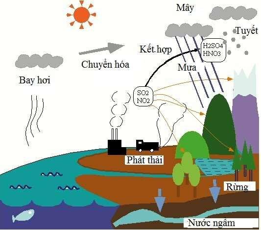 Mưa axit là gì? Tác hại của mưa axit như thế nào?