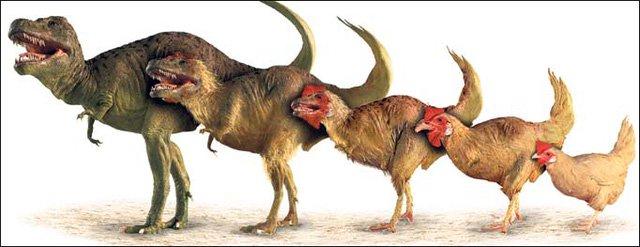 Mừng năm Đinh Dậu, đây là 8 sự thật về loài gà khiến bạn phải ngỡ ngàng
