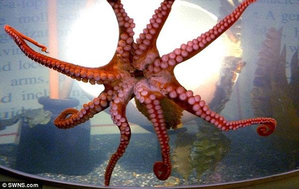 Nấm lạ hôi thối có hình thù giống bạch tuộc