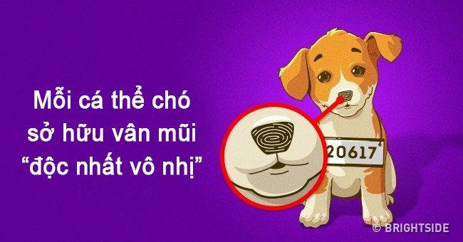 Nếu con người có vân tay thì mỗi chú chó lại sở hữu vân mũi cực đặc biệt đấy!