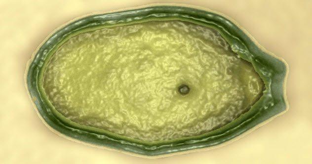 Nghi vấn những căn bệnh có nguồn gốc… ngoài hành tinh
